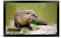 JST2826 Asian Otter, Framed Print
