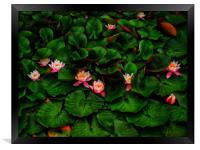 Water Lilies                                      , Framed Print