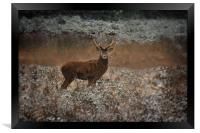 Red Deer Stag In The Wild, Framed Print