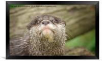 Otter - You talking to me, Framed Print