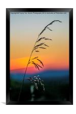 Standing Tall At Sunset, Framed Print