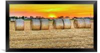 round bales in Modena, Italy, Framed Print