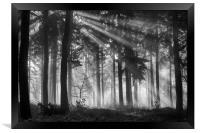 Woodland Light, Framed Print