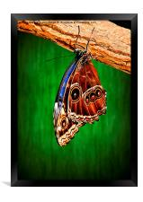 Hanging around., Framed Print