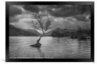 The lone tree in mono, Framed Print