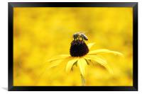Yellow flower and a bee, Framed Print
