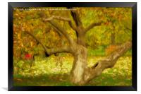 Gnarled Tree in Autumn, Framed Print