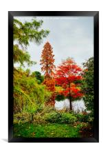 Reds and Greens of Autumn, Framed Print