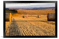 Straw Bales at Dawn, Framed Print