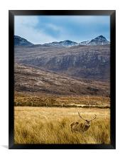 Lonesome Stag, Framed Print