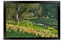 """""""Daffodils and Sunny days 2 """", Framed Print"""