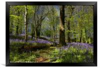 """It was a misty , moonlit night in the bluebell wo, Framed Print"