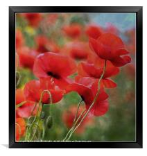 """Arty Poppies"", Framed Print"