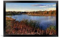 """""""Autumn reeds at the lake"""", Framed Print"""