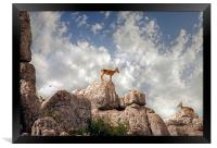 Wild mountain goats - Ibex in El Torcal,  Antequer, Framed Print