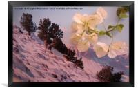 A sign of Spring in winter,, Framed Print