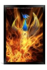 The Phoenix rises from the ashes, Framed Print