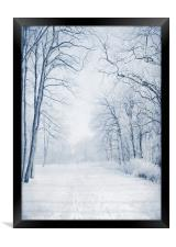 Winter Path, Framed Print
