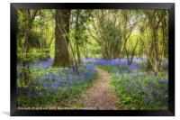 Clapham Wood Bluebells, Framed Print