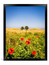 Poppies in a field, Framed Print