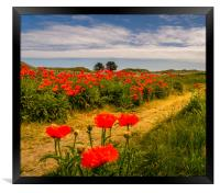 Pathway to the Poppies, Framed Print