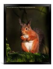 Red Squirrel , Framed Print
