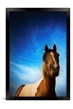 Horse in summer with a summer's evening blue skies, Framed Print