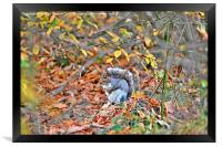grey squirrel in trees, Framed Print