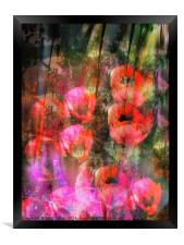 Wild Poppies , Framed Print