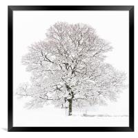Winter Tree , Framed Print