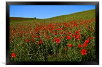 Poppies by Nature, Framed Print