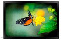 Monarch Butterfly, Framed Print