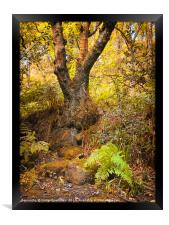 ancient forest tree and fern, Framed Print