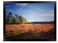 Yellow reeds on the lake Uvildy, Framed Print