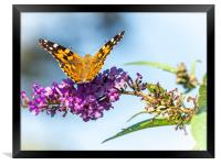 Painted Lady Butterfly - Take Off, Framed Print