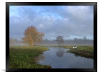 Swans in the early morning mist by the River Wensu, Framed Print