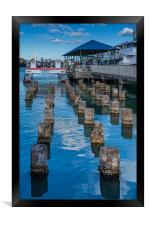 Old Pilings into Barbuda Express, Framed Print