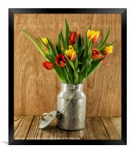 red and yellow tulips on wood, Framed Print