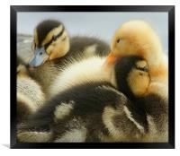 Why am I yellow?, Framed Print