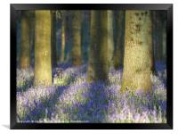 Shadows in the Bluebells, Framed Print