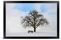 Single tree with bench and snow, Framed Print