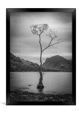 Lone Tree at Buttermere, Framed Print