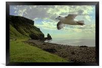 Fulmar flying at Talisker Bay, Framed Print