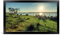 Old Cork oak tree (Quercus suber) on the shores of, Framed Print