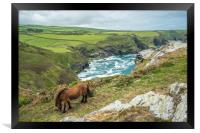 Horse at Willapark Lookout, Framed Print