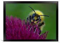 Bumbling Around, Framed Print