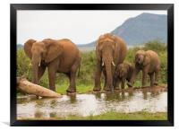 Elephant recreational time at the waterhole , Framed Print