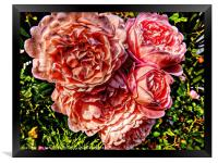 A bouquet of pink rose flowers        , Framed Print