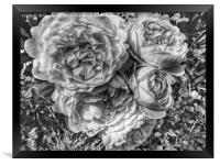 A black and white bouquet of pink rose flowers, Framed Print