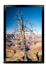 Dead Tree - Grand Canyon, Framed Print